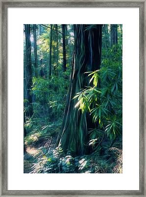Sunshine In The Forest Framed Print
