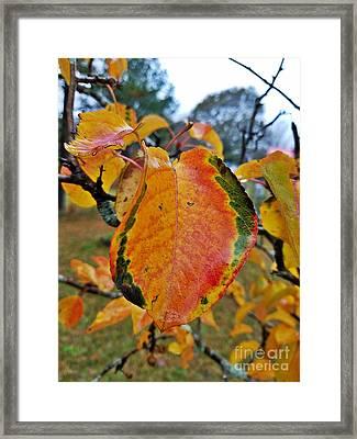 Sunshine In The Rain Framed Print