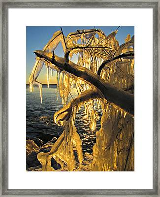 Framed Print featuring the photograph Sunshine Is Fine by Greta Larson Photography