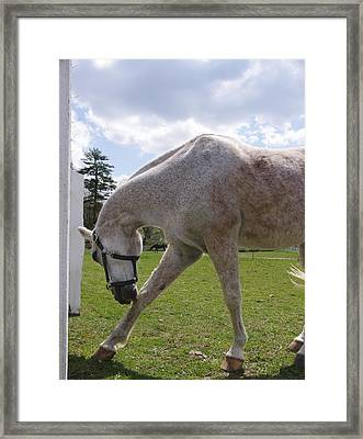 Sunshine Framed Print by John Conrad Johnson III