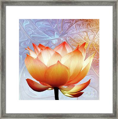 Sunshine Lotus Framed Print by Jacky Gerritsen