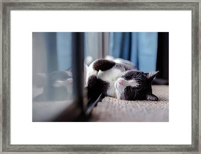 Sunshine Lover Framed Print