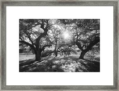 Framed Print featuring the photograph Sunshine Oaks by Alexander Kunz