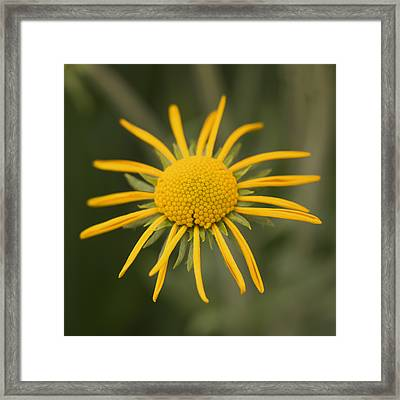 Sunshine On A Stem Framed Print