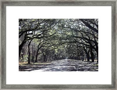 Sunshine On Live Oaks Framed Print by Carol Groenen