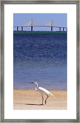 Sunshine Skyway Bridge With White Egret Framed Print by Rose  Hill