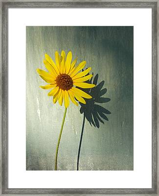 Sunshine Through The Grey Framed Print by Trinket's Legacy