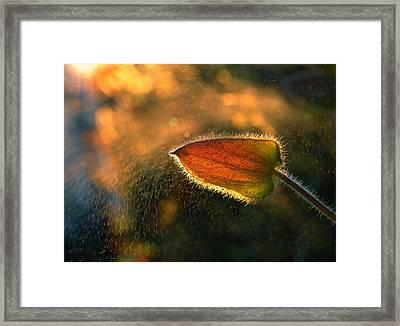 Sunshine Through The Rain Framed Print by Tomer Yaffe