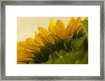 Sunshine Under The Petals Framed Print by Sandra Foster