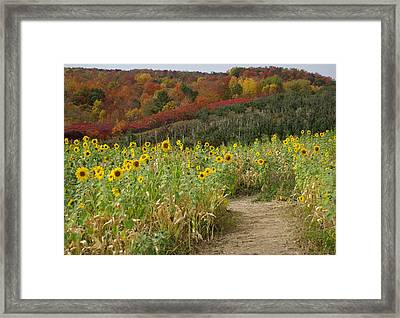 Sunshine Valley Framed Print