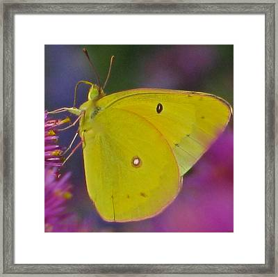 Sunshine Wings Framed Print