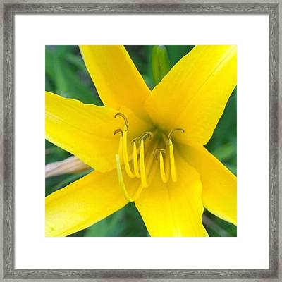 #sunshine #yellow #lily To Make You Framed Print