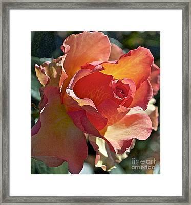 Sunstruck Framed Print by Gwyn Newcombe