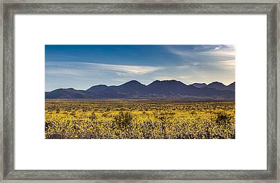 Super Bloom Death Valley  Framed Print