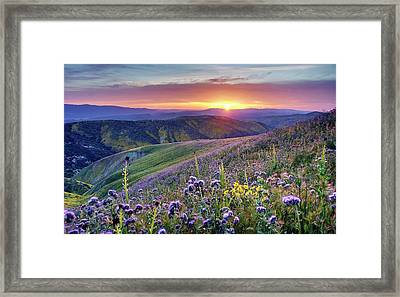 Framed Print featuring the photograph Super Bloom In California Desert by Peter Thoeny