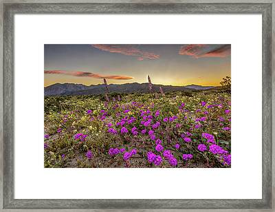 Framed Print featuring the photograph Super Bloom Sunset by Peter Tellone