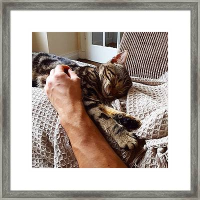 Super Comfy Cat 😻 #cutecat Framed Print by Dante Harker