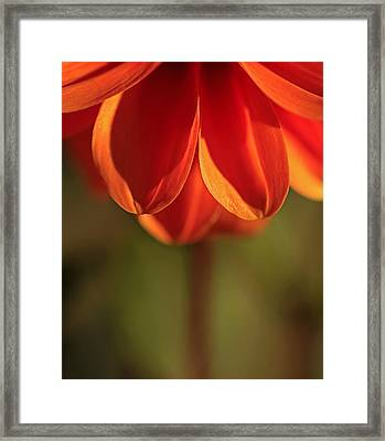 Super Frizz Framed Print
