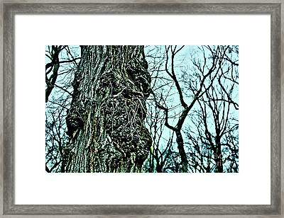 Framed Print featuring the photograph Super Tree by Sandy Moulder