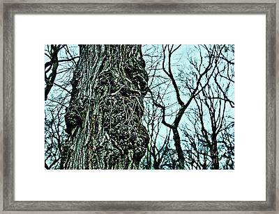 Super Tree Framed Print by Sandy Moulder