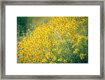 Superbloom Golden Yellow Framed Print