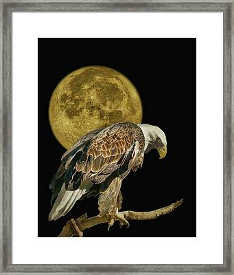 Supermoon - Bald Eagle Framed Print by Nikolyn McDonald