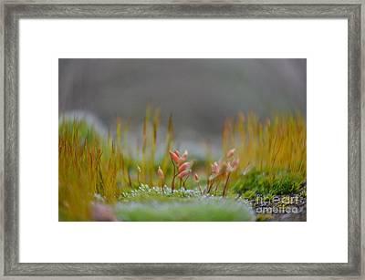 Supreme Joy Framed Print