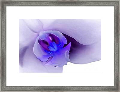 Supreme Orchid Framed Print by Krissy Katsimbras