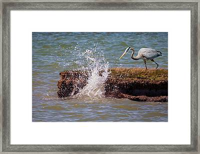 Surf And Turf Framed Print by Brian Wallace