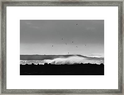Surf Birds Framed Print