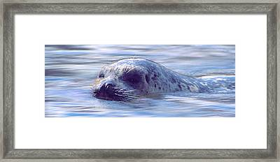 Surfacing Seal Framed Print
