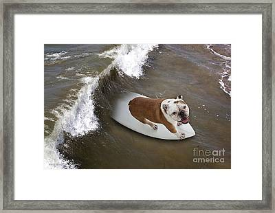 Framed Print featuring the photograph Surfer Dog by John A Rodriguez