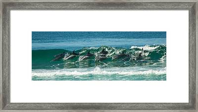 Surfing Dolphins 4 Framed Print