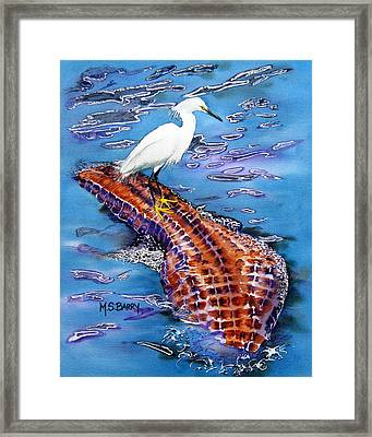 Surfing The Gator Framed Print by Maria Barry