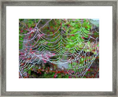 Surfing The Web Framed Print by Randy Rosenberger