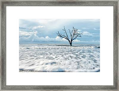 Surfside Tree Framed Print by Phyllis Peterson