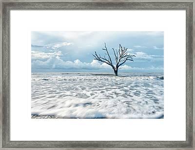 Surfside Tree Framed Print