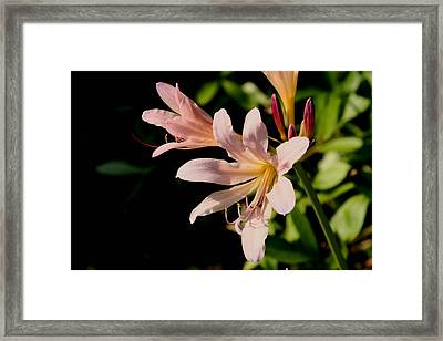 Surprise Lilly Framed Print by Martin Morehead