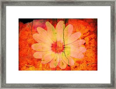 Surprise Me Framed Print by Susanne Van Hulst