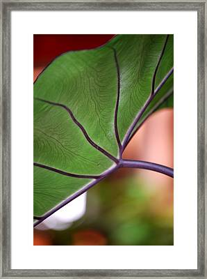 Framed Print featuring the photograph Surprise by Nancy Bradley