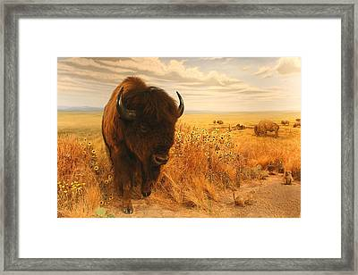 Surprise On The Ridge No Effects Framed Print