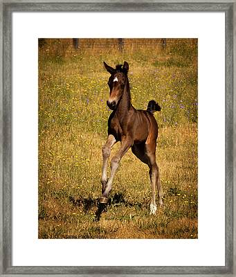 Surprise Party Framed Print