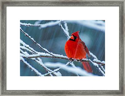 Surprise Snow Framed Print