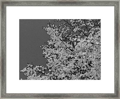 Surreal Deconstruction Of Fall Foliage In Noir Framed Print