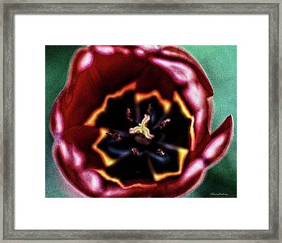 Surreal Flower Framed Print
