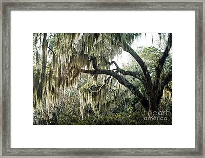 Surreal Gothic Savannah Georgia Trees With Hanging Spanish Moss Framed Print