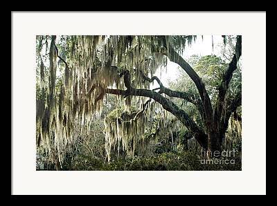 Savannah Surreal Fine Art Trees Framed Prints