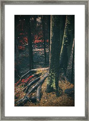 Surreal Red Leaves In A Dark Forest Finland Framed Print by Sandra Rugina