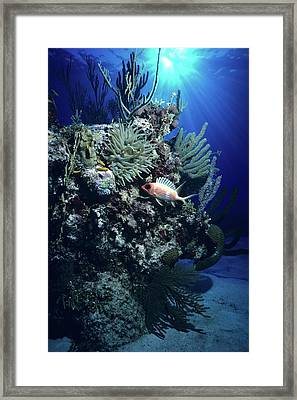 Surreal Reef Collage Framed Print