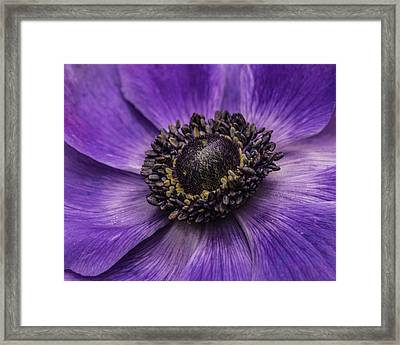 Framed Print featuring the photograph Surround Me by Julie Andel